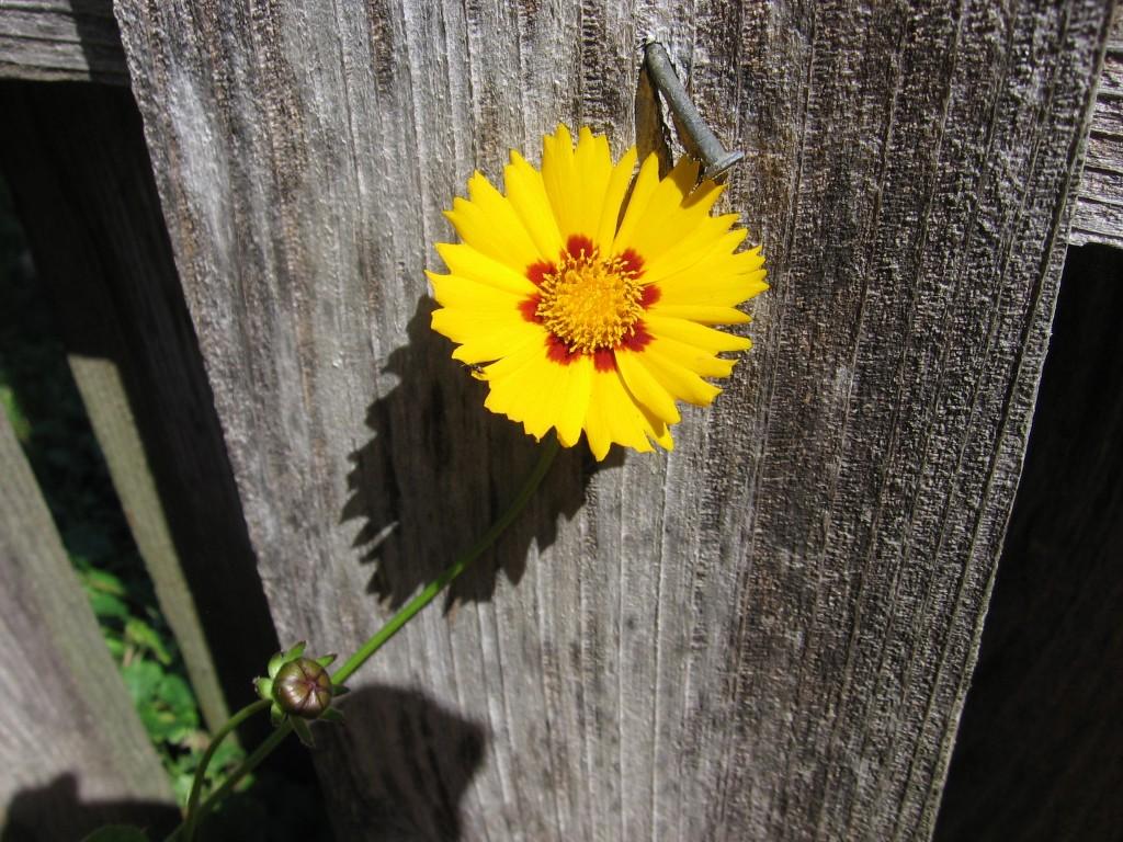 flowerNail